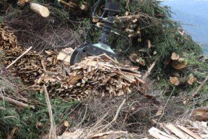 biomass forest